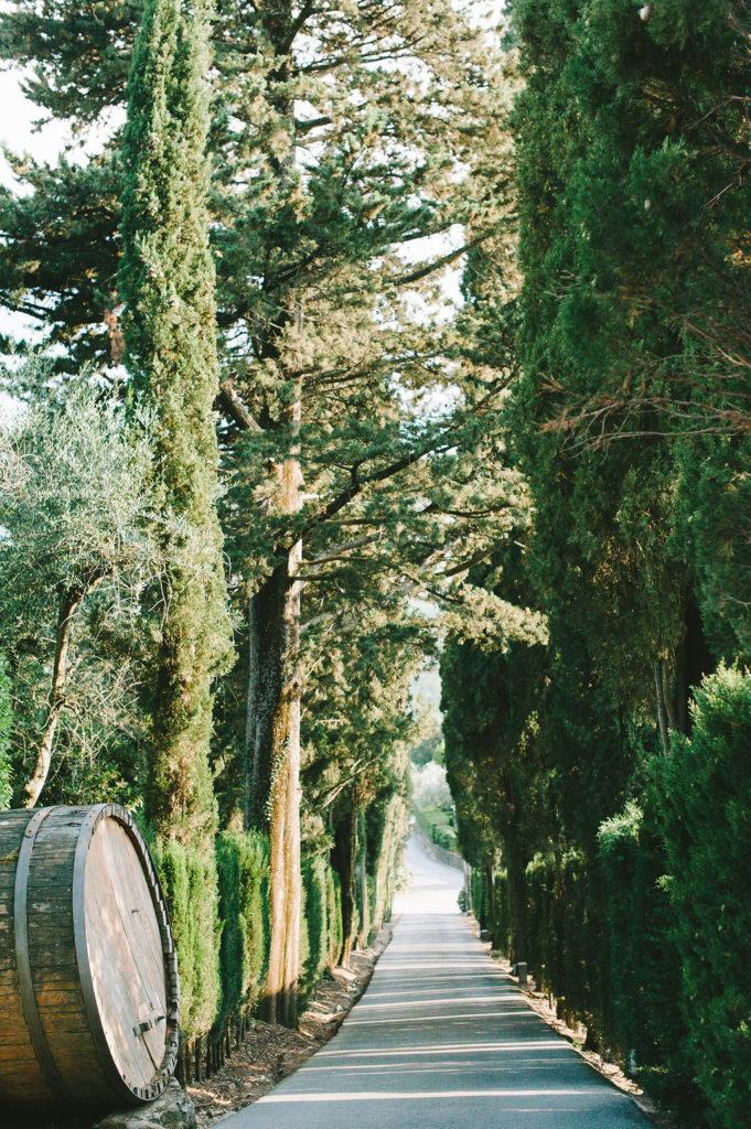 Cypress - Wedding at Villa Vignamaggio - Italian Wedding Designer